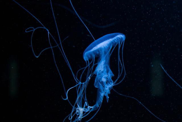 Luminus - fotokunst von Katharina Stöcker