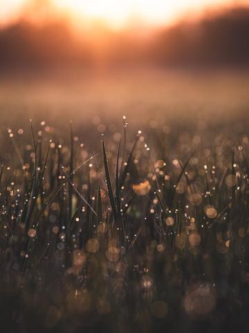 Morning Dew - fotokunst von Gergo Kazsimer