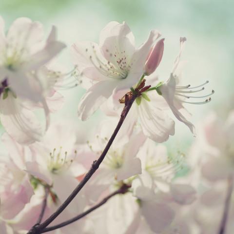 blütenzauber - fotokunst von Sabrina Ziegenhorn