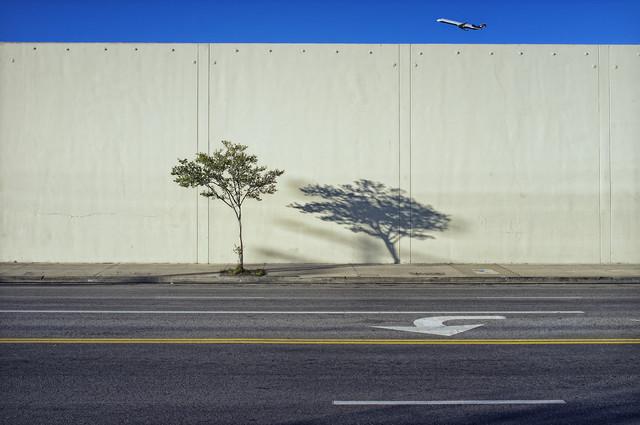 Tree, Shadow, and Plane - fotokunst von Jeff Seltzer