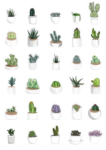 Succulents - fotokunst von Katherine Blower