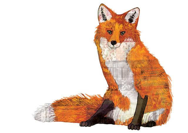 Patchwork Fox - fotokunst von Katherine Blower