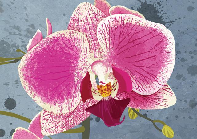 Orchid - fotokunst von Katherine Blower
