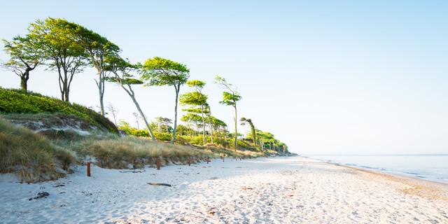 Küstenwald VIII - fotokunst von Heiko Gerlicher