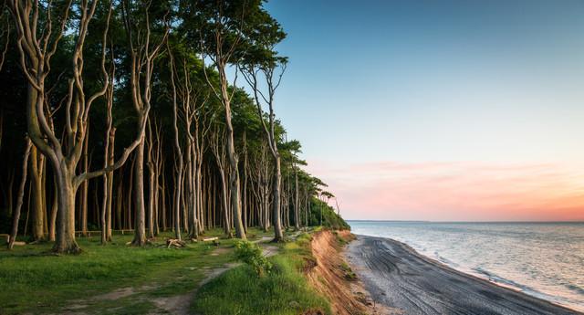 Küstenwald IV - fotokunst von Heiko Gerlicher