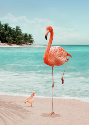 Möchtegern Flamingo - fotokunst von Jonas Loose