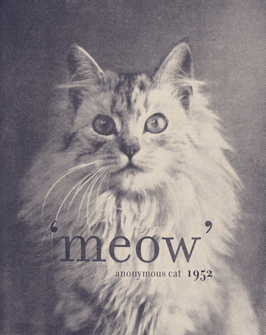 Famous Quote Cat - fotokunst von Florent Bodart