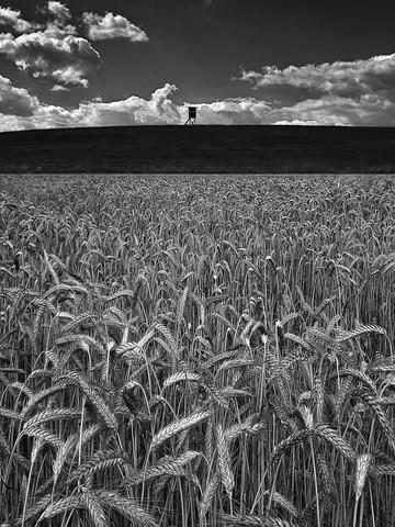 Getreidefeld im Sommer - fotokunst von Ernst Pini
