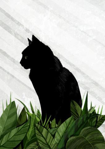 black Cat - fotokunst von Katherine Blower