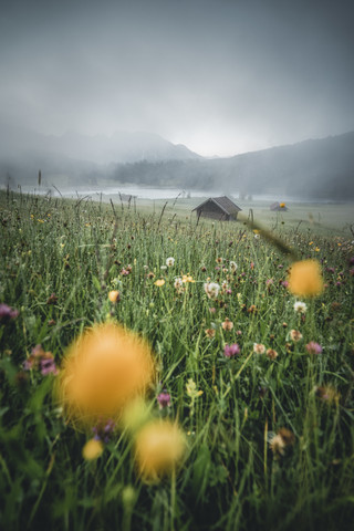 Yellow Morning - fotokunst von Philipp Steiger