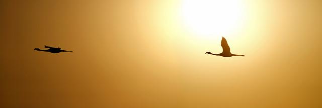 Flamingos im Flug - fotokunst von Dirk Heckmann