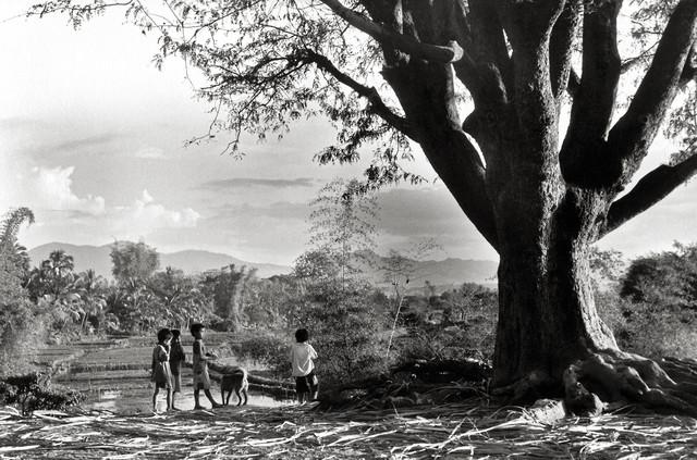 Children at the Big Tree - Central Highland - Vietnam - fotokunst von Silva Wischeropp