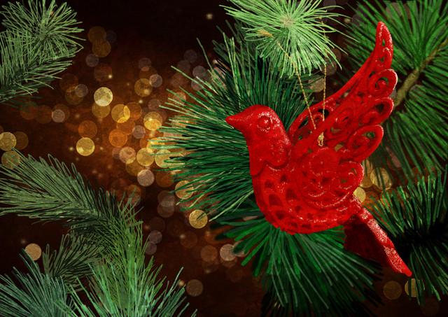 Festive Dove - fotokunst von Katherine Blower