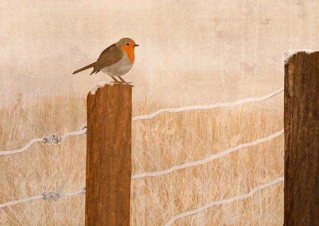 Robin - fotokunst von Katherine Blower