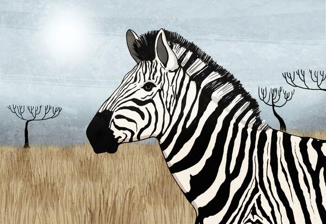 Zebra - fotokunst von Katherine Blower