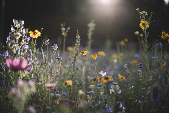 Sommerblumenwiese in der Sommersonne - fotokunst von Nadja Jacke