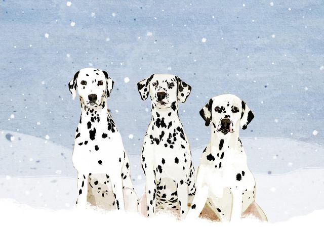 Dalmatians - fotokunst von Katherine Blower