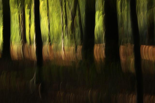autumn abstract #o4 - fotokunst von Steffi Louis