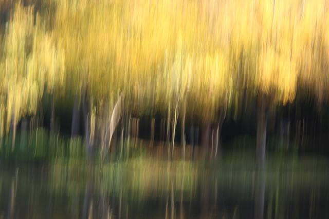 autumn abstract #o3 - fotokunst von Steffi Louis