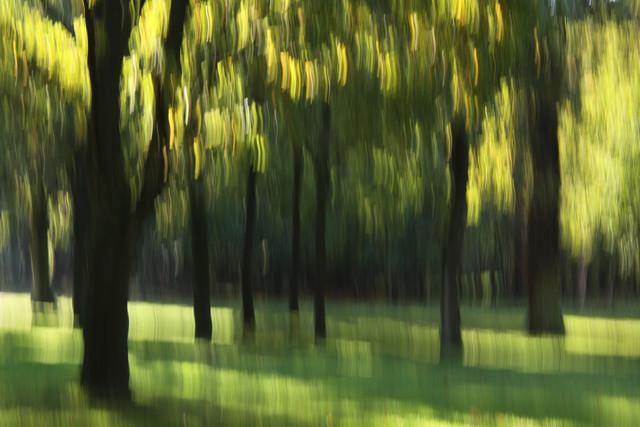 autumn abstract #o2 - fotokunst von Steffi Louis
