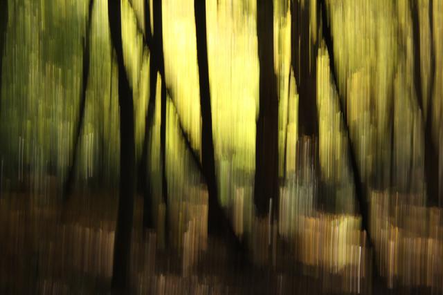 autumn abstract #o1 - fotokunst von Steffi Louis