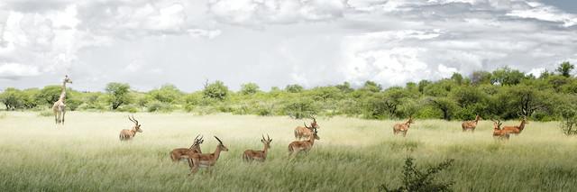Etosha Nationalpark, Namibia - fotokunst von Norbert Gräf