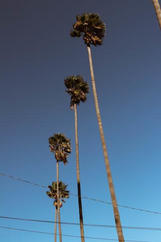 Everything is better with Palm Trees - fotokunst von Ari Stippa