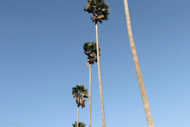 Everything is better with Palm Trees 2 - fotokunst von Ari Stippa