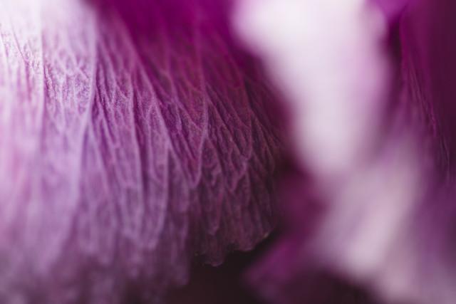Hibiskus Blütenblatt - fotokunst von Nadja Jacke