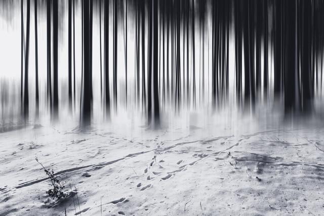 Strichcode im Wald - fotokunst von Oliver Henze