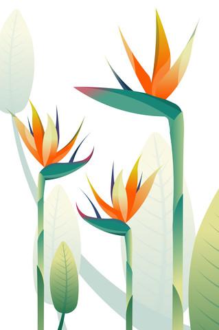 Paradiesvogelblüte - fotokunst von Sabrina Ziegenhorn