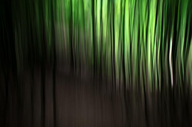 Bamboo - fotokunst von Andreas Weiser