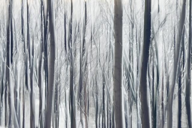 Verwischte Bäume mit Schnee - fotokunst von Nadja Jacke