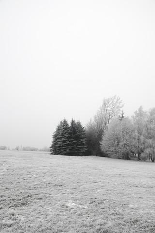 Winter Wonderland - fotokunst von Studio Na.hili