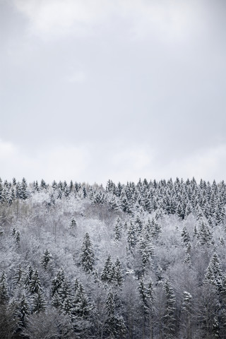 White Winter Forest - fotokunst von Studio Na.hili