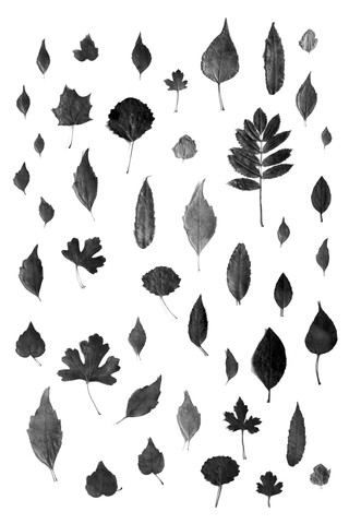 Sign of Autumn - Black - fotokunst von Studio Na.hili