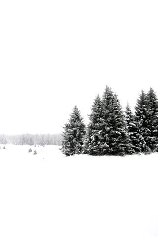 White White Winter 2/2 - fotokunst von Studio Na.hili