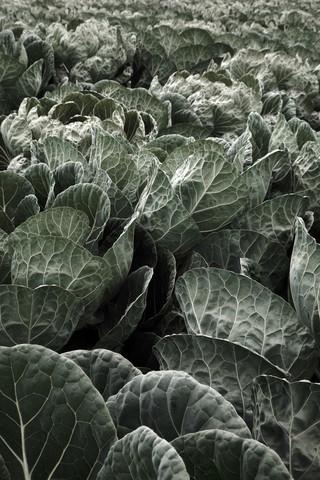 Eat your Greens - fotokunst von Studio Na.hili