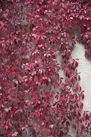 Beauty of Autumn - fotokunst von Studio Na.hili
