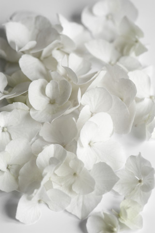 White Beauty - fotokunst von Studio Na.hili