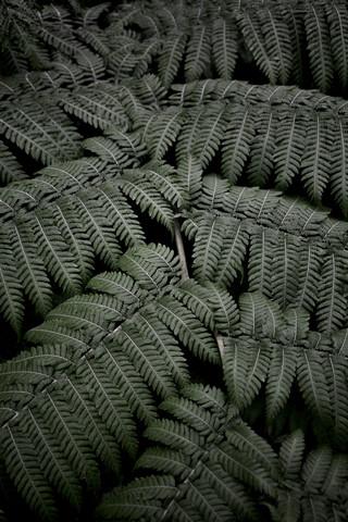 Tropical Garden 4/5 - fotokunst von Studio Na.hili
