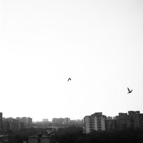 two birds - fotokunst von Shantala Fels
