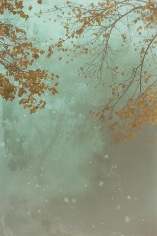 Herbst und Nebel - fotokunst von Andrea Hansen