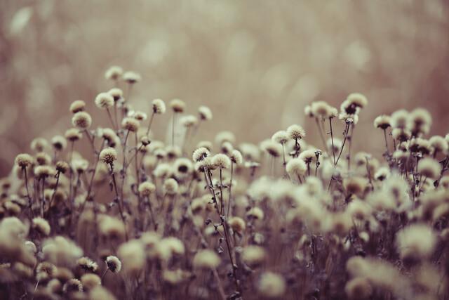 Herbstblumen - fotokunst von Andrea Hansen