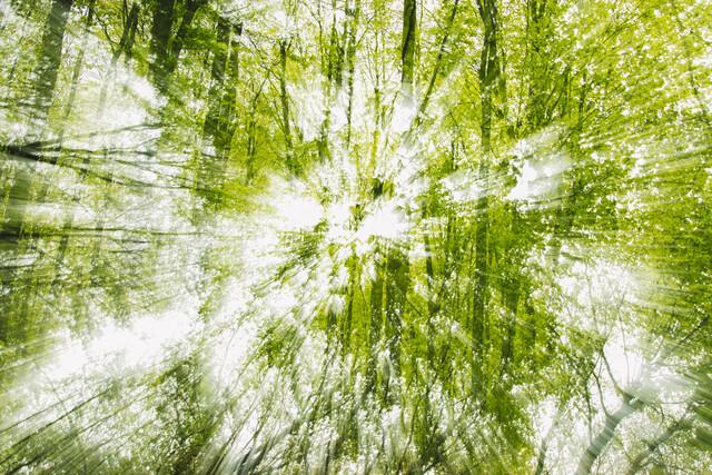 Frühling im Wald doppelt verwischt - fotokunst von Nadja Jacke