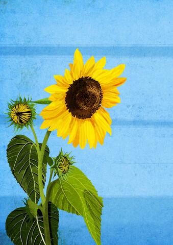 Sunny Day - fotokunst von Katherine Blower