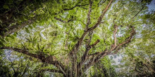TREE OF LIFE - fotokunst von Andreas Adams