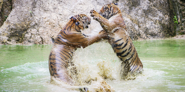 FIGHT - fotokunst von Andreas Adams