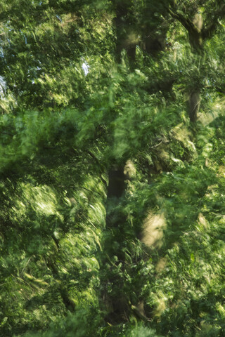 Buchenlaub vom Winde verweht - fotokunst von Nadja Jacke