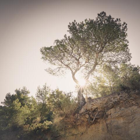 der einsame baum - eine ibizenkische impression - fotokunst von Dennis Wehrmann